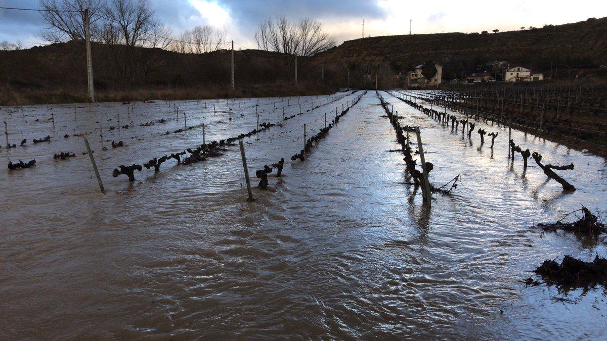 Assa (Rioja Alavesa) | 25 de enero de 2019 | Foto: Eduardo Nestares