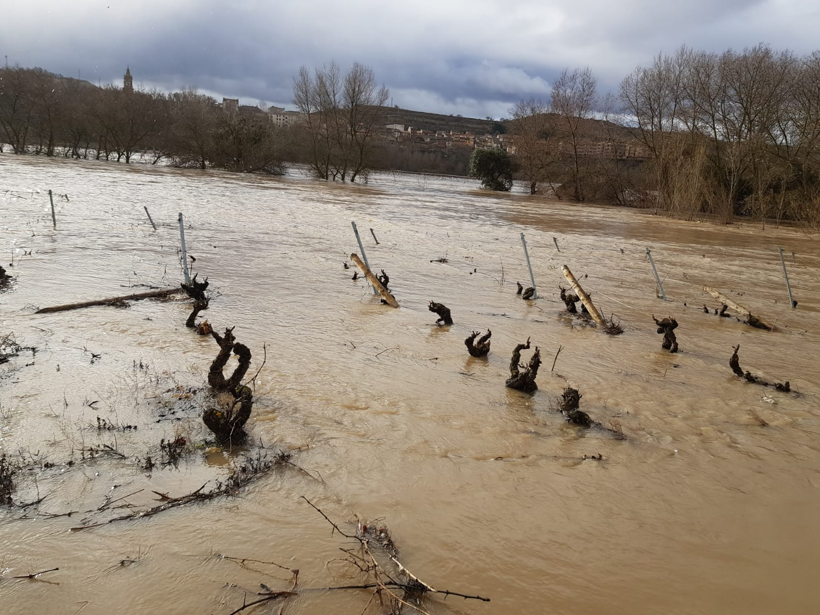 Paraje de 'La Campanilla' en Cenicero | 25 de enero de 2019 | Foto: David Castro (Garañango)
