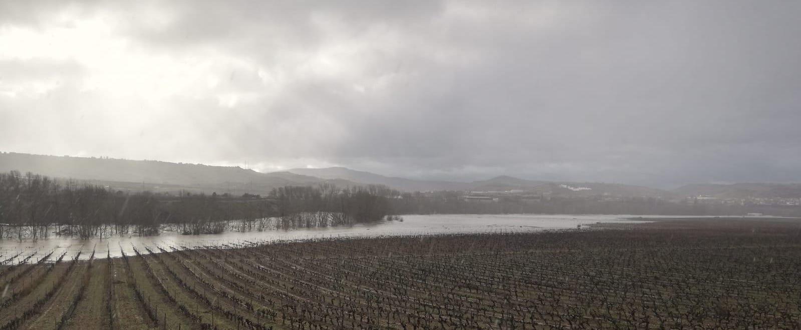 Elciego (Rioja Alavesa) | 25 de enero de 2019