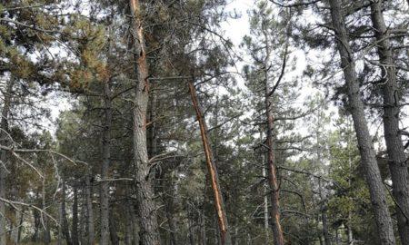 Imagen: Bomberos Forestales de La Rioja